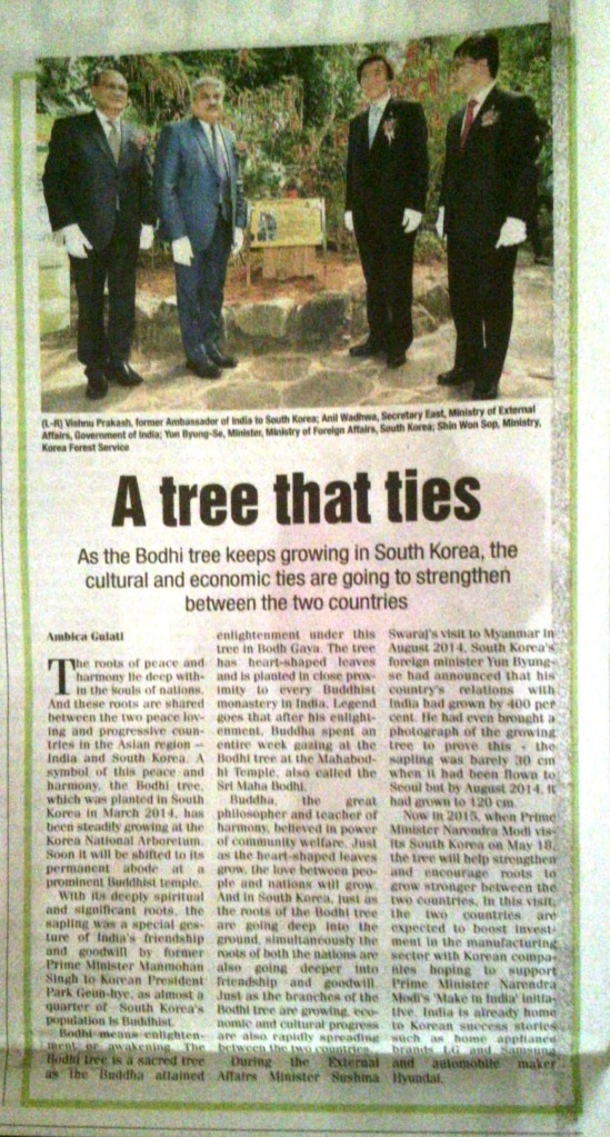 India korea bodhi tree