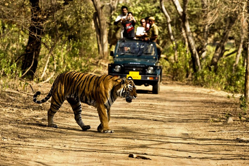 jim-corbett-tiger-national-park