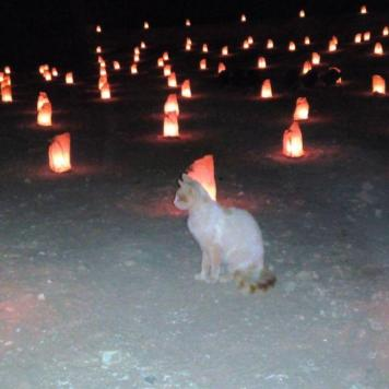 Even the cats listen to the stories of the at night inside Petra, Jordan. The lamps are all eco-friendly