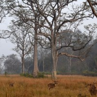 The Wild Colours Of Corbett