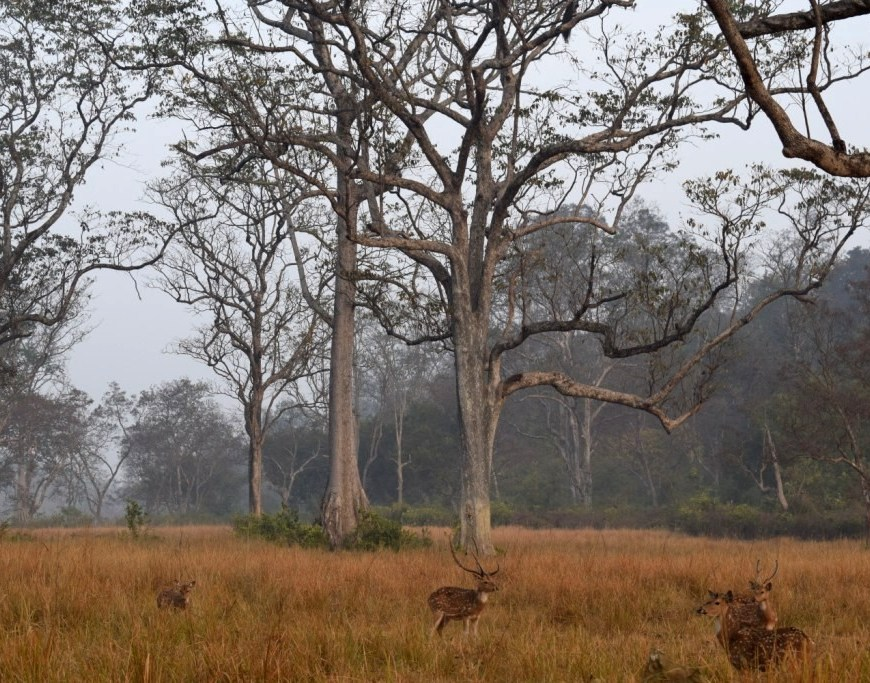 The deers watch the people enjoying the safari, Corbett Tiger Reserve, Ramnagar, Uttarakhand, India