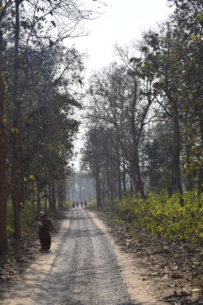 Villagers come to collect wood in Corbett Tiger Reserve, Ramnagar, Uttarakhand, India