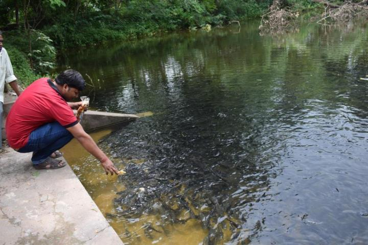 Hitesh, the driver, feeding fish in the pond behind the temple, Raigarh, India