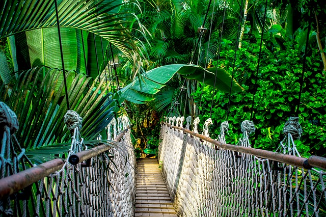 Suspension bridge, Image by Nile, Pixabay