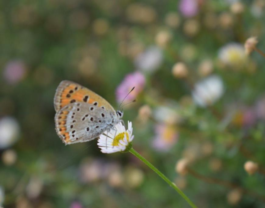 Nature, butterflies and flowers at Kanatal, Uttarakhand, India