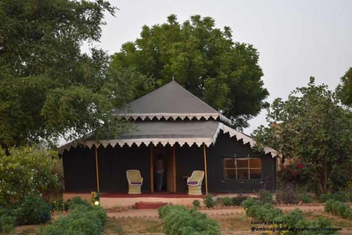 Orchard Tents & Tranquility, Pushkar, Rajasthan, India