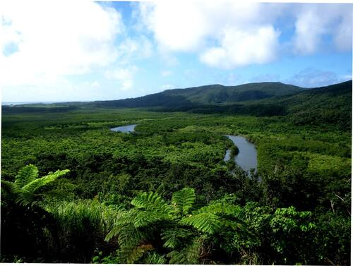 Mangrove forest (Nakama River, Iriomote Is.)© MOEJ